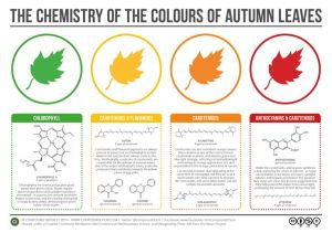 leaf chemistry