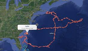 sharktracker
