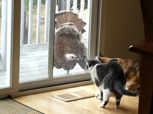 """Take a good look Mittens, this is why we have the humans prepare these things for us."""