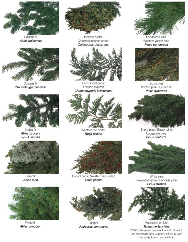 EvergreenGlossary